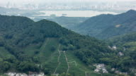 4K Time-lapse:Terraced tea plantation on hillside with downtown skyline in background,Hangzhou,China