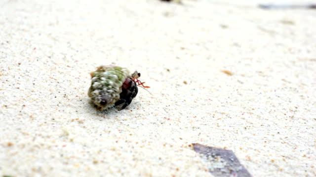 Tiny crab walking at the beach