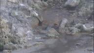 A tiny fountain of hot water bubbles up from beneath rocks near Sasso Pisano Italy