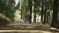 WS to MS of couple cylcling along dirt road in forest