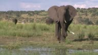 To villagers in Northern Botswana elephants are mainly seen wild animals that cannot be controlled and destroy their crops