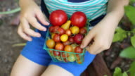 A toddler boy holding a small basket of tomatoes outside in a garden.