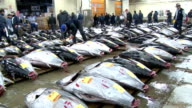 Tokyo's Tsukiji fish market held its last startoftheyear auction Tuesday ahead of its relocation scheduled for late 2016 The aging market is set to...