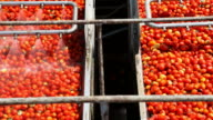 Tomato Sauce Factory