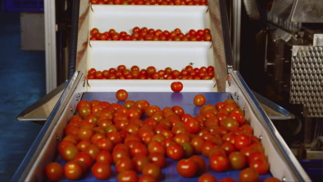 WS Tomato sorting machine / Algarrobo, Malaga, Spain
