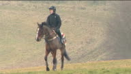 Tony McCoy riding on gallops ENGLAND EXT Jockey Tony McCoy riding racehorses on gallops with others and over hurdles