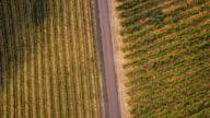 Top-Down schot van wijngaarden doorsneden door weg