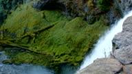 Top of Sahalie Falls green forest waterfall pan McKenzie River Valley Oregon 16