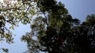 HD: Top mit Baum und Himmel und Sonne