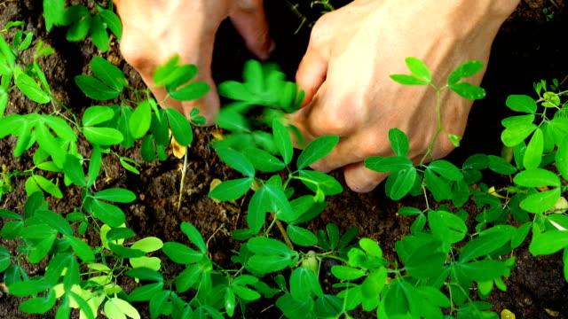 4K top view , man planting tree