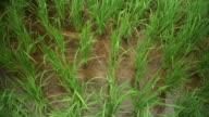 Draufsicht der erfreut Reis stammt Dateninhabers Süßwasser