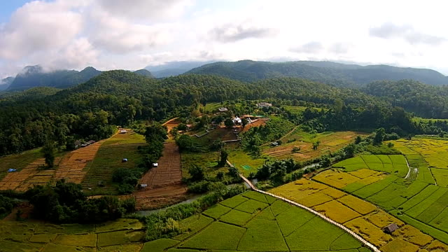 Top view Paddy field