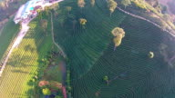 Top View Tea plantation in Thailand