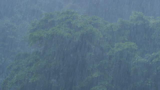 MS Torrential rain in rainforest / Bukit Lawang, North Sumatra, Indonesia