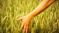 Touching Barley (Hd 1080)