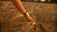 HD: Touching The Wheat