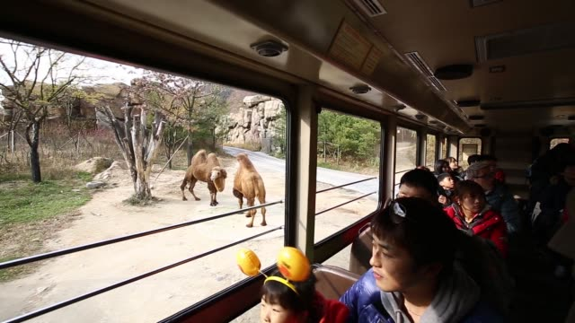 A tour guide speaks to visitors during a safari tour at the Everland Resort operated by Cheil Industries Inc in Yongin Gyeonggi Province South Korea...
