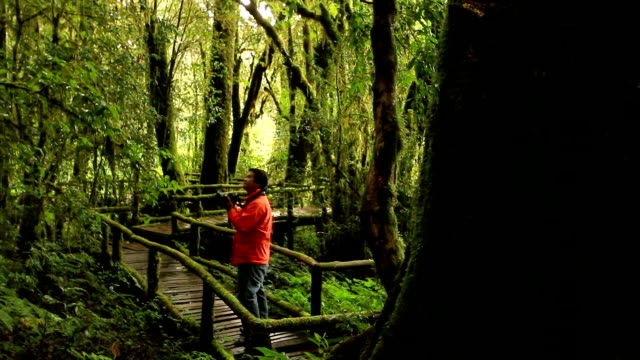 Tourism take photo and walk in rainforest; dolly shot