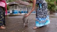 LS turista nutrizione, una scimmia