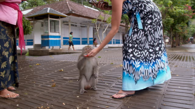 LS Tourist Feeding A Monkey