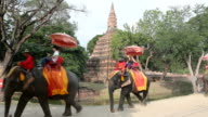 Tourist group rides on the backs of elephants