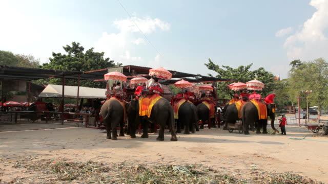Touristen reiten durch die Stadt auf dem Rücken von Elefanten