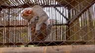 ZI turista toccare Scimmia s Paw