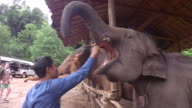 Tourist visit an elephant sanctuary outside of Chiang Mai Ecotourism and animal rights have made them popular