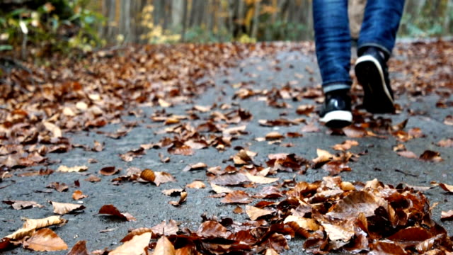 Tourist walking in autumn forest in evening. Travel concept.