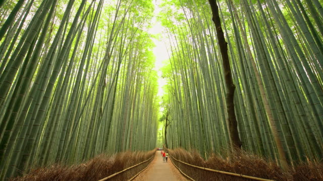 WS Tourists admiring amazing bamboo forest in Japan