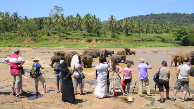 Tourists at Pinnawala Elephant Orphanage near Kegalle, Sri Lanka, Asia