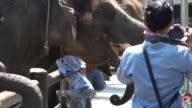 Tourists Enjoying The Charm Of The Rescued Sumatran Elephants In Bali, Indonesia