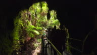 Tourists Enter the Thurston Lava Tube in Hawaii Volcanoes National Park