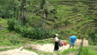 Tourists Visiting Tegallalang, The Most Famous Rice Field Terrace Of Bali, Indonesia