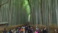 WS Tourists walk through Arashiyama bamboo forest / Kyoto, Japan