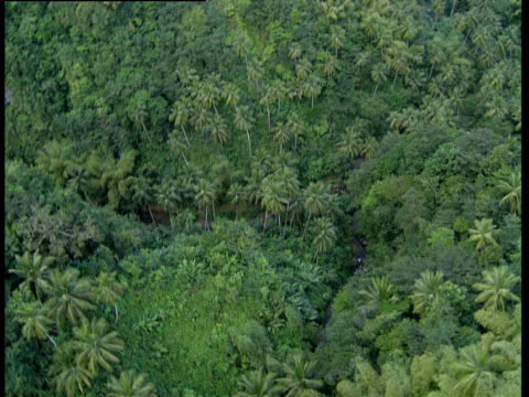 Track around and above mountainous rainforest Windward Islands
