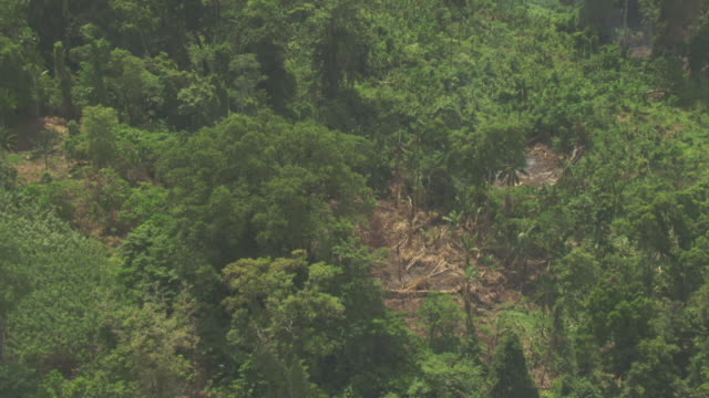 Track around deforested area of jungle.