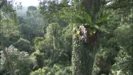 Track down through rainforest canopy to floor, Sabah, Borneo