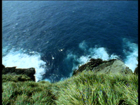 Track forward and pan right as black browed albatross launches from cliff and flies out to sea