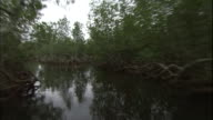 Track forward from boat through trees, Niger Delta, Nigeria