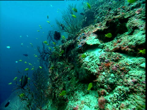 Track forward over coral reef, Maldives