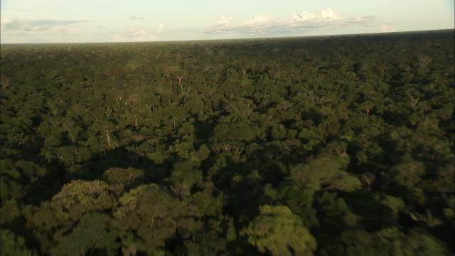 Track forward over dense forest canopy Available in HD.
