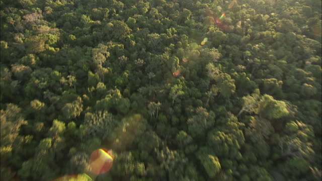Track forward over dense forest canopy bathed in sunlight Available in HD.