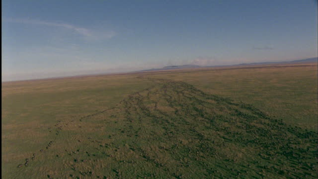 Track forward over huge herd of migrating Wildebeest on savannah. Available in HD.