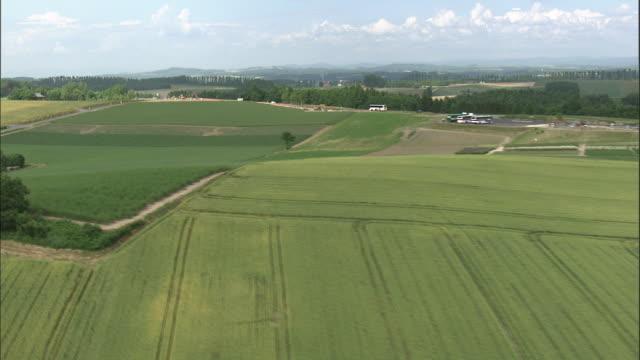 Track forward over rolling green fields, Biei, Hokkaido