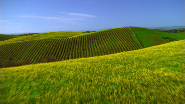 Track forward over rolling green fields to vineyard, Napa Valley, California Available in HD.