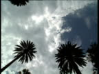 Track forwards from car sunroof looking up at palm trees against cloudy blue sky Hollywood