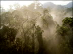 Track forwards over rainforest canopy after rain fall, steam rises over trees, Borneo