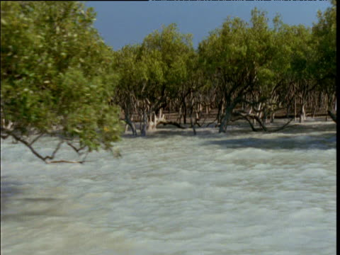 Track left along flooded mangrove forest, Broome, Western Australia