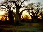 Track left around group of baobab trees on edge of salt pan.